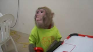 猿スゴ技3