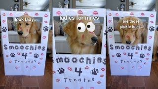 My Puppy Runs a Kissing Booth!