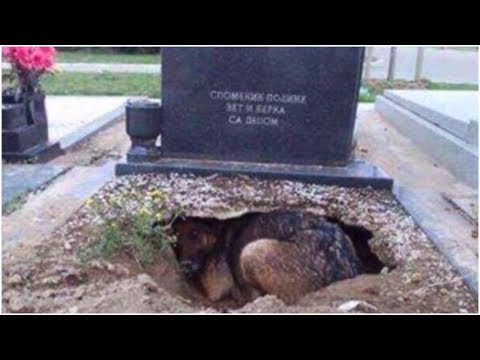 People Said This Dog Was Guarding Her Owner's Grave, But One Rescuer Uncovered A Stunning Secret mp3