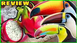 3 Toucans Try Dragon Fruit for the First Time! (Toucan Fruit Review)