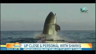 THE BIGGEST GREAT WHITE SHARK IN THE WORLD!!!!