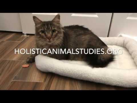Feline Bodywork Certification Course - YouTube