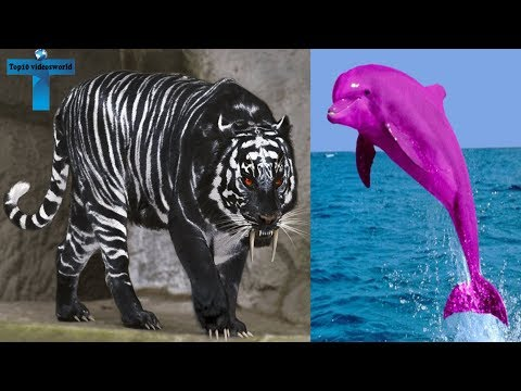 Top 10 Animals With The Most Unique Color Mutations On Earth   Animals That Are The Wrong Color