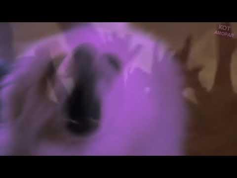 """Собака шпиц (Пёс Гейб) Элджей и Feduk """"Розовое вино"""""""