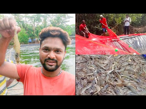 , title : 'Shrimp Farming and Prawn Farming in India | BioFloc System | Vlog#69 | WTF DIL