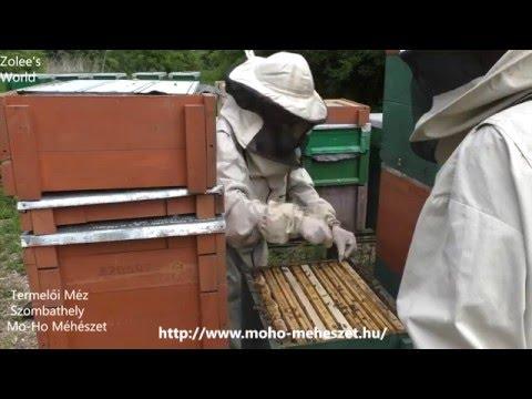 méhészeti kezelés ízületek hogyan kezeljük a láb ízületeinek diszlokációját