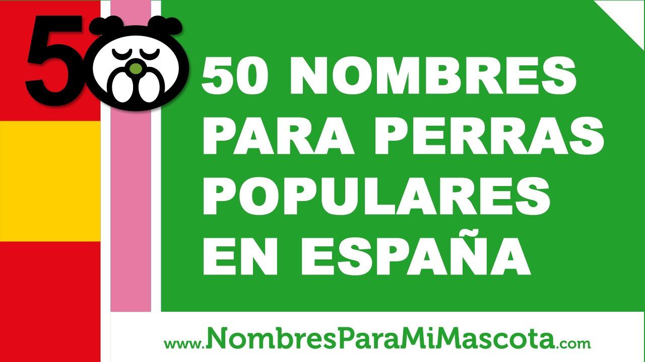 50 nombres para perras populares en España - www.nombresparamimascota.com