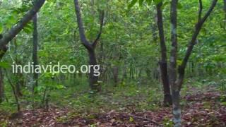 Kareem forest in Kasaragod, Kerala