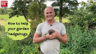 How to help your garden hedgehogs
