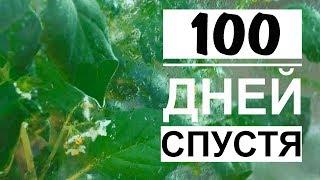 #3 Вечный террариум через 100 дней / Что это за растение?? / Mr.GrowChannel