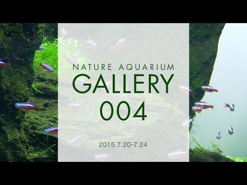 [ADAview] NATURE AQUARIUM GALLERY#004(EN)
