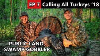 Swamp Gobbler Hunting - Wisconsin Public Land - Calling All Turkeys