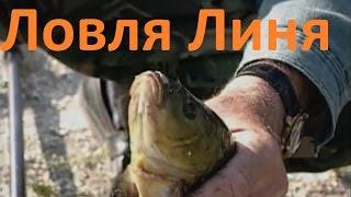 По диалоги о рыбалке на радио
