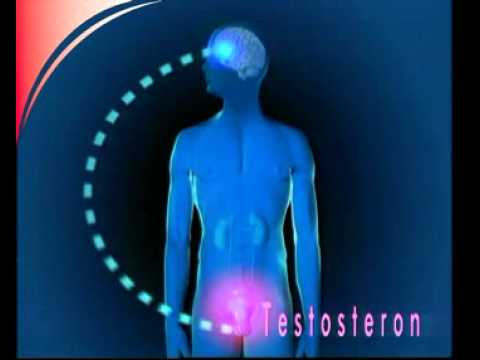 Exazerbation der Prostatitis Sex