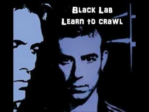 Learn To Crawl - Black Lab - YouTube