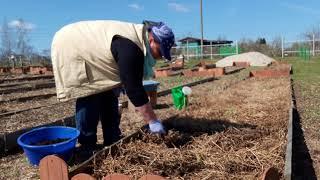 """Сияние 2"" при весенней посадке семян в открытый грунт"