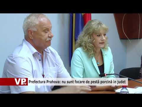 Prefectura Prahova: nu sunt focare de pestă porcină în județ