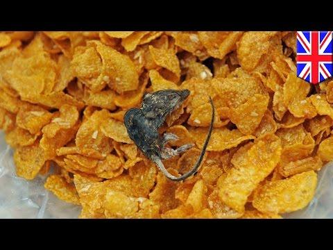 Dipterya bacillus parasite