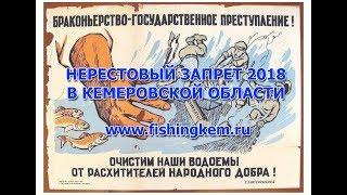 Весенний запрет рыбной ловли в кемеровской области