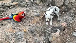 Scarlet Macaw & Dog