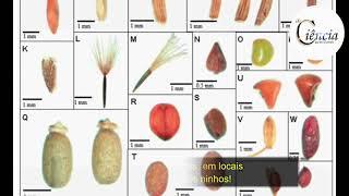Formigas Granívoras desempenham um importante papel na ciclagem de nutrientes e dispersão involuntár