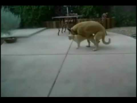 Cat In Shock After Seeing  Dog  Doing Cat.wmv