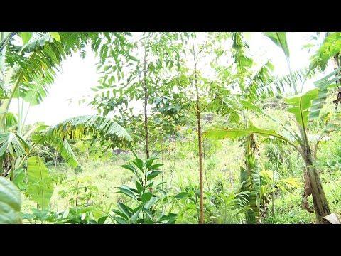 Você já ouviu falar em agrofloresta? Descubra a técnica que cultiva sem desmatar