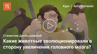 Альтернативное развитие разума — Дробышевский Станислав