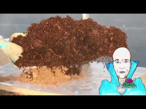 Cima di 10 unguenti da un fungo
