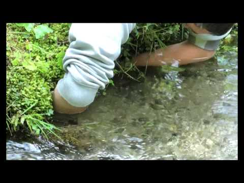 Download Fische mit der Hand fangen