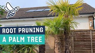 Grow #WithMe: Root Pruning a Palm Tree (Trachycarpus fortunei)