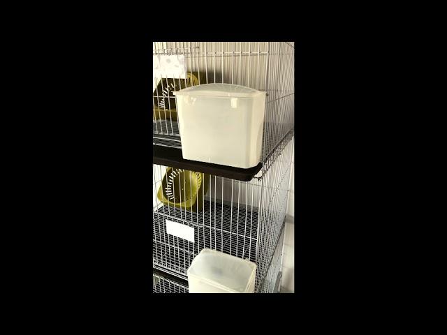 سلاكة حمام-قفص حمام-قطع طيور-محكر حمام-عون المربي للفقاسات والنتافات