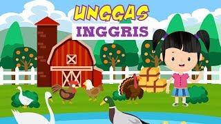 Belajar Mengenal Nama-nama Unggas dalam Bahasa Inggris Bagian 1 | Bunbun Learning Poultry