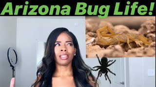 ARIZONA BUG LIFE! SCORPIONS, ROACHES, BLACK WIDOW OH MY!