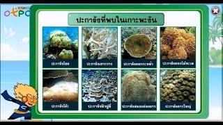 สื่อการเรียนการสอน ระบบนิเวศทางทะเล  ม.3 วิทยาศาสตร์