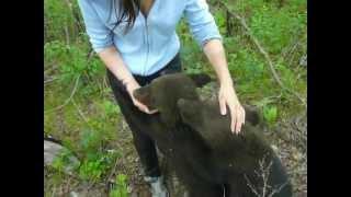 Медвежата (Амурская область)