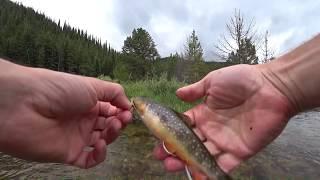 Fishing Colorado.  Swan River near Breckenridge Co.