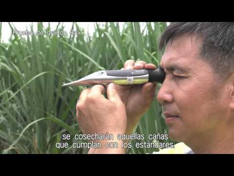 台糖本土二砂製造流程_西班牙語版