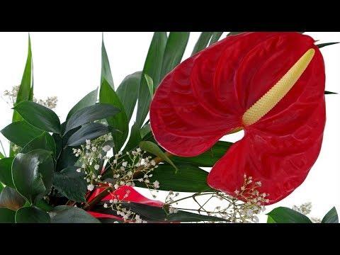 Эти 10 растений принесут СЧАСТЬЕ И ЛЮБОВЬ В ВАШ ДОМ