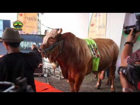 Harga patogen kuda dan di mana untuk membeli