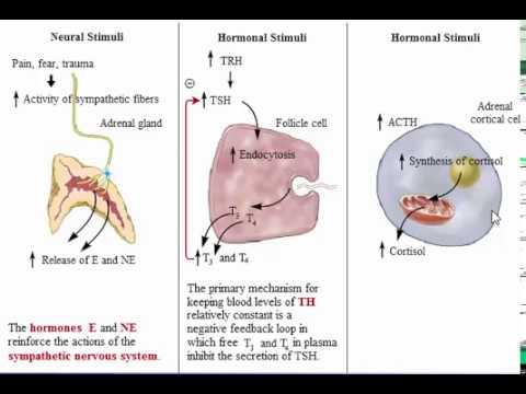 Frattura diabete e hip
