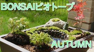 BONSAIビオトープ秋の盆栽作り!