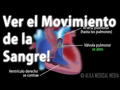 Diferencia de presión arterial se mide en la mano izquierda y derecha