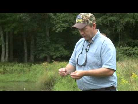 Farm Pond Fishing _ Part A