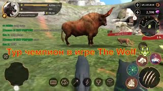 Тур чемпион в игре The Wolf 🐺 игра game можно смотреть мультфильмы онлайн мультики для детей