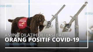 Peneliti di Inggris Latih Anjing Agar Bisa Deteksi Orang yang Terpapar Virus Corona