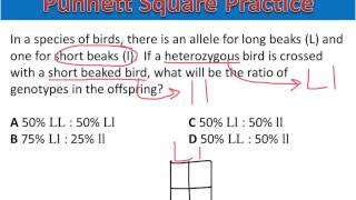 Punnett Square Practice #1