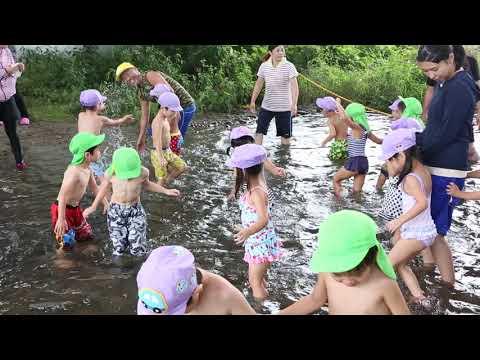 平成29年度 みなみ保育園 園外保育(川遊び) たんぽぽ組2