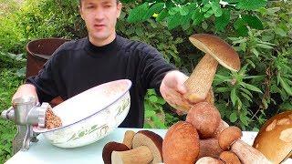 Как посадить и вырастить грибы на огородном участке