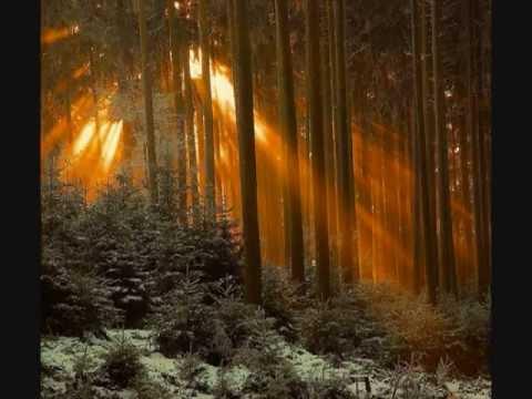 Baka Beyond - Spirit Of The Forest